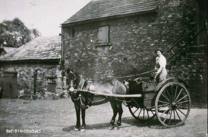 Horse-drawn milk float at Melwood Farm