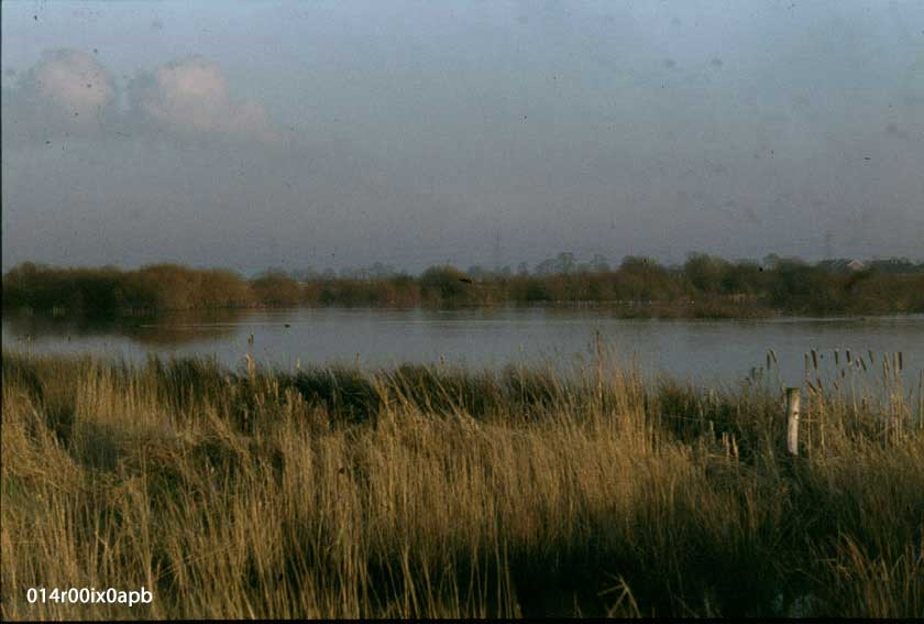 Wet Lands, Lower Mickletown, from canal bank.