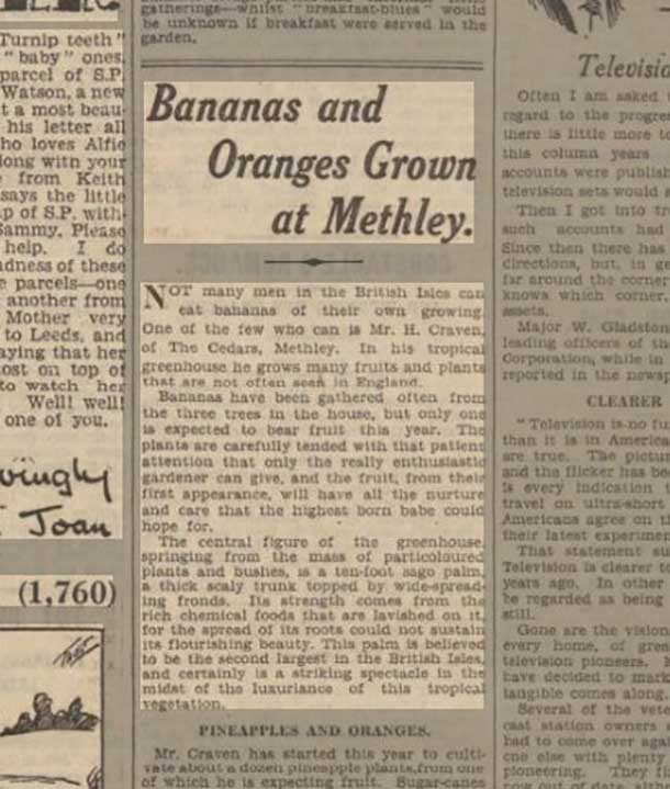 Bananas and Oranges Grown at Methley